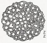 filigrán